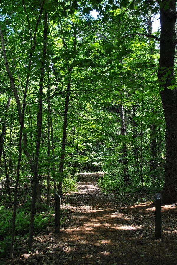 Sentier Arboretum