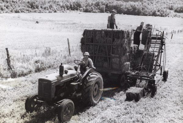 Travail à la ferme (foins), Villa Grand Coteau