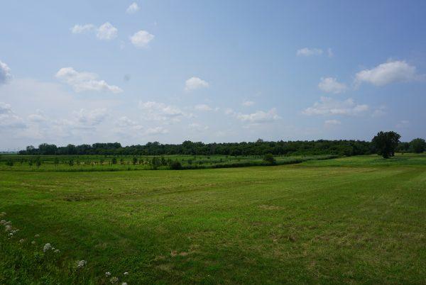 Paysage agroforestier rang des Vingt-Cinq